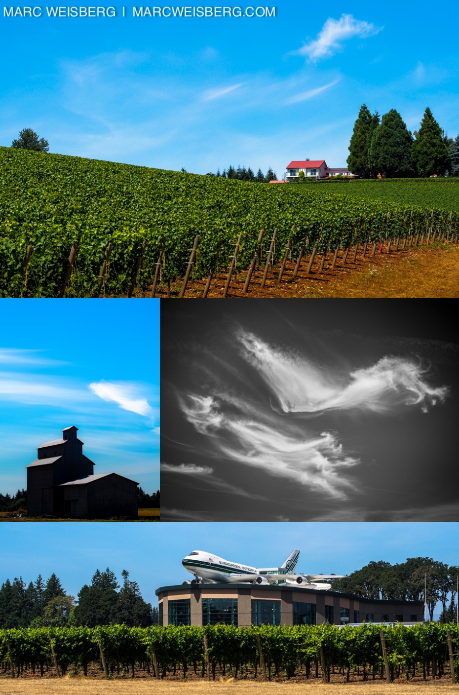 willamette valley vineyard pictures