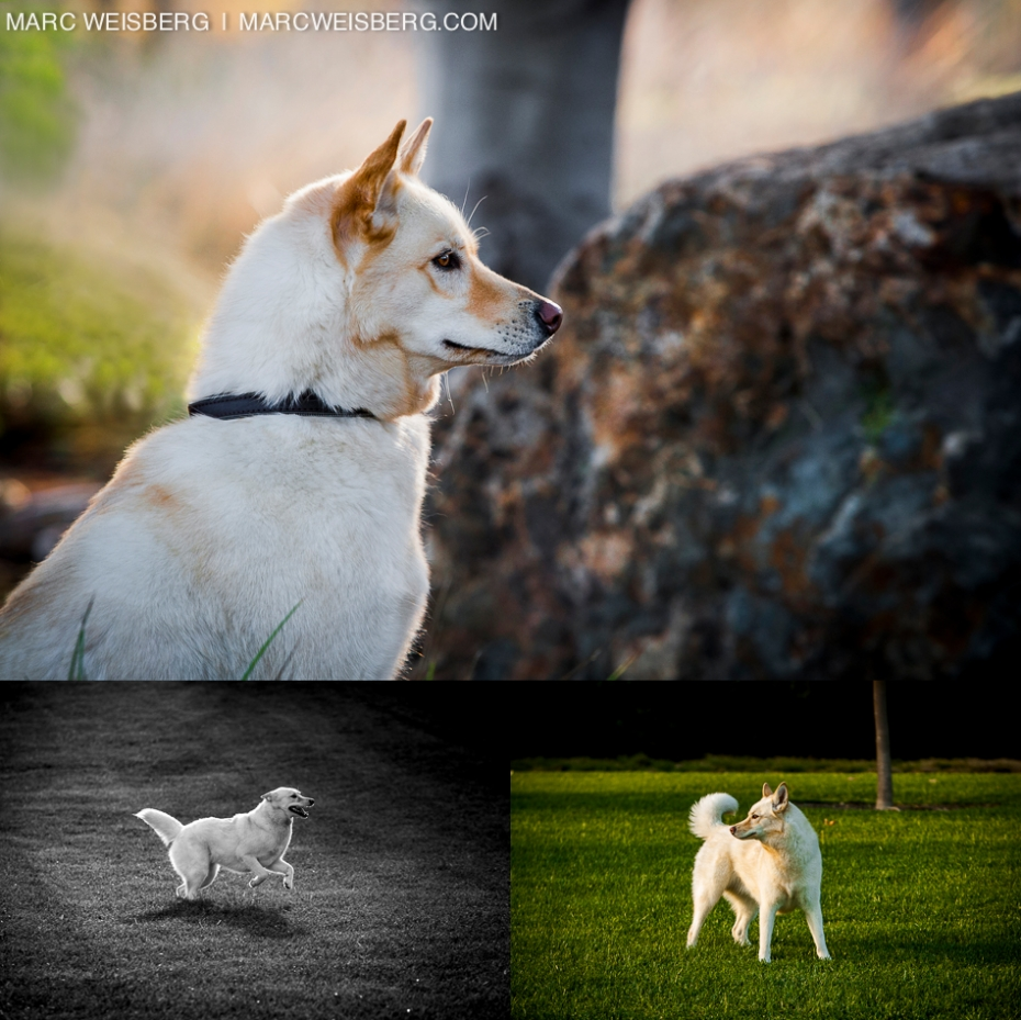 Outdoor Dog and Family Photo Session