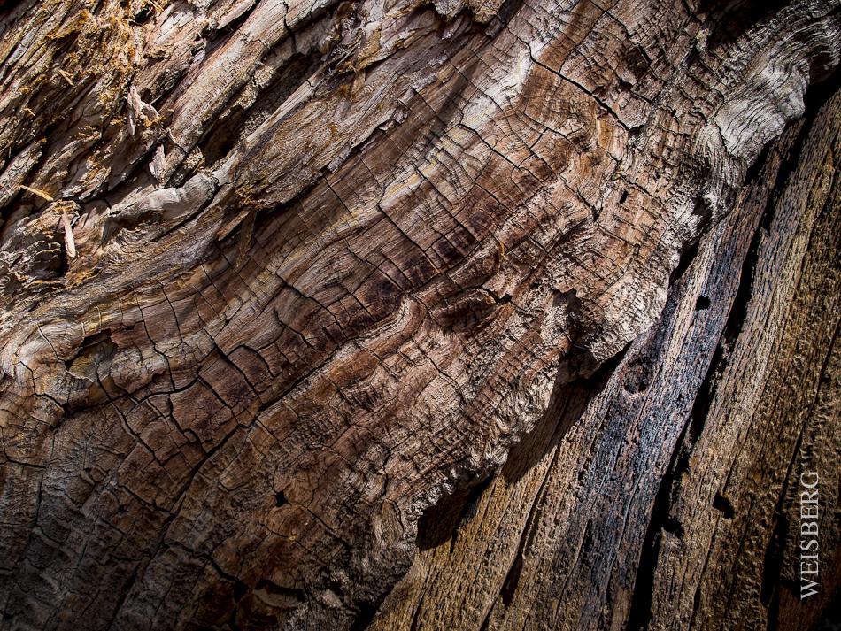 Mighty Sequoia Tree bark.