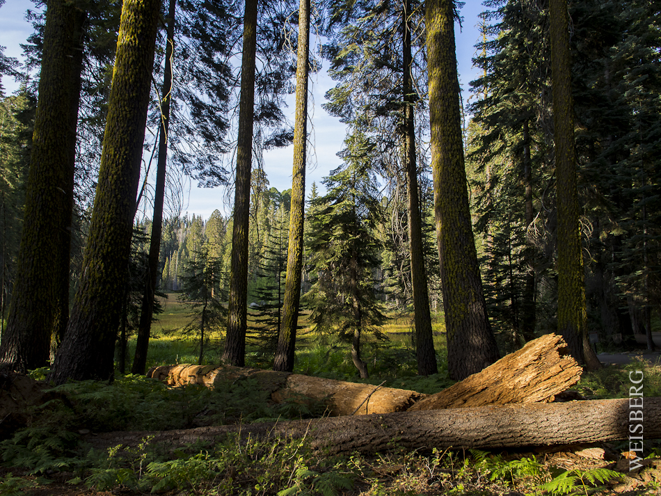 Crescent Meadow, Sequoia Notional Forest, just before sunset.