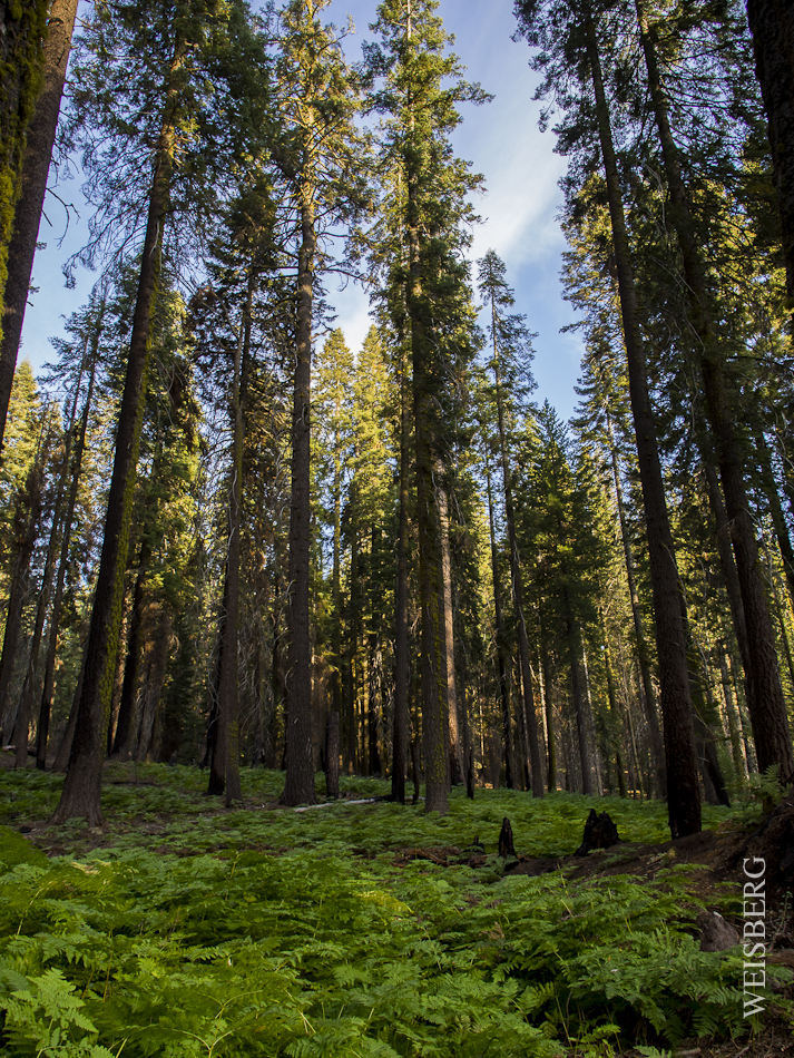 Outside of Crescent Meadow, Sequoia National Forest.