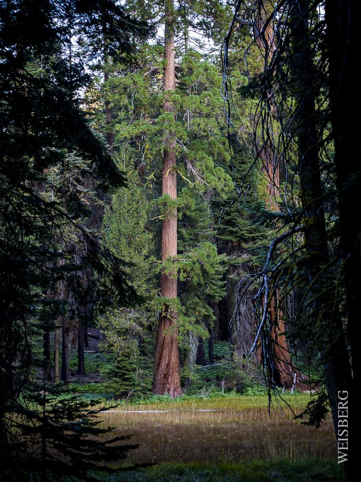 Landscape Crescent Meadow, Sequoia National Park.
