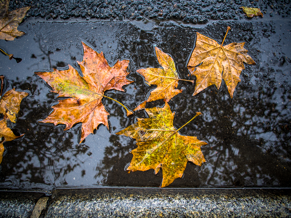 Colorful fall leaf in a puddle, Paris photographed with Olympus OMD EM5