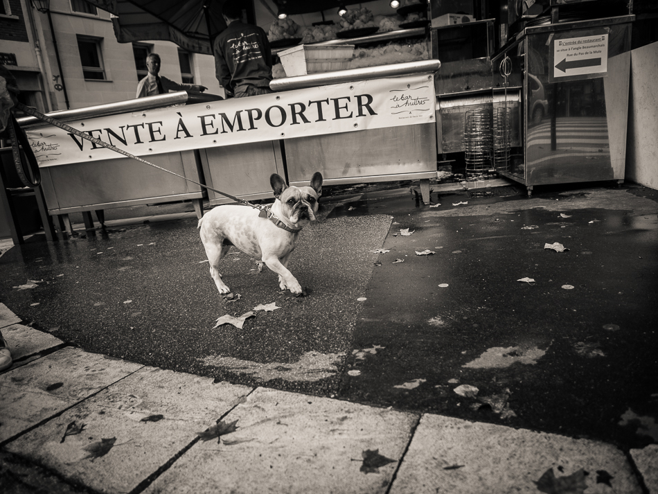 French Bulldog on the street in Paris by travel photographer Marc Weisberg dot com