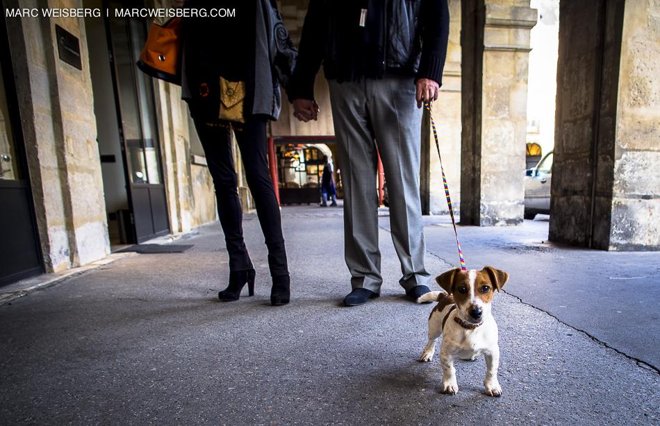 paris place des vosges dog travel photography