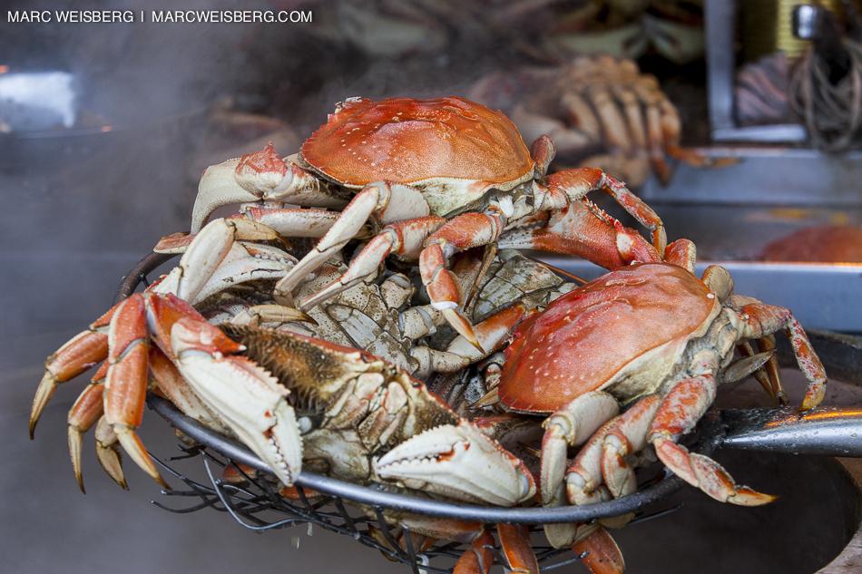san francisco fishermans warf dungeness crab travel photogapher