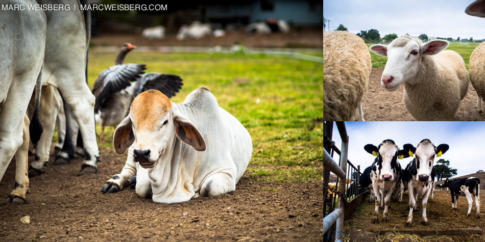 windsor ca farm travel photographer pictures