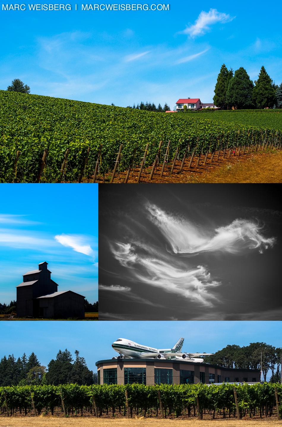 willamette valley vineyard pictures