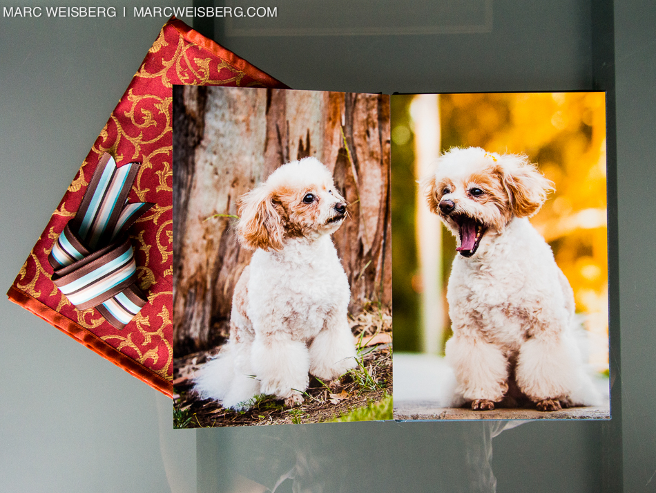best irvine pet photographer blueyedawg dot com pictures