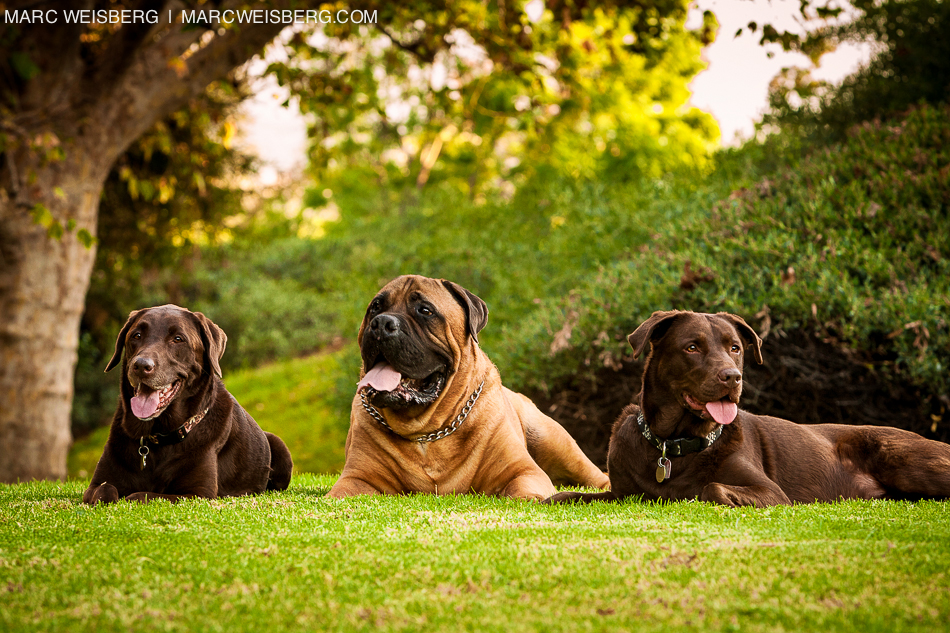 family portraits with pets in the park irvine photographer marc weisberg