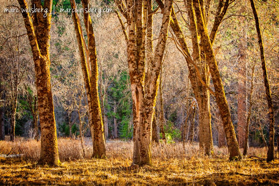 Fall in Yosemite National Park, California.