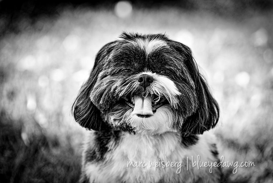 pet photographer_0067