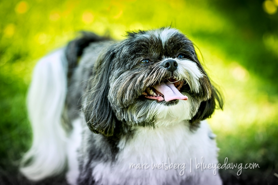 pet photographer_0069