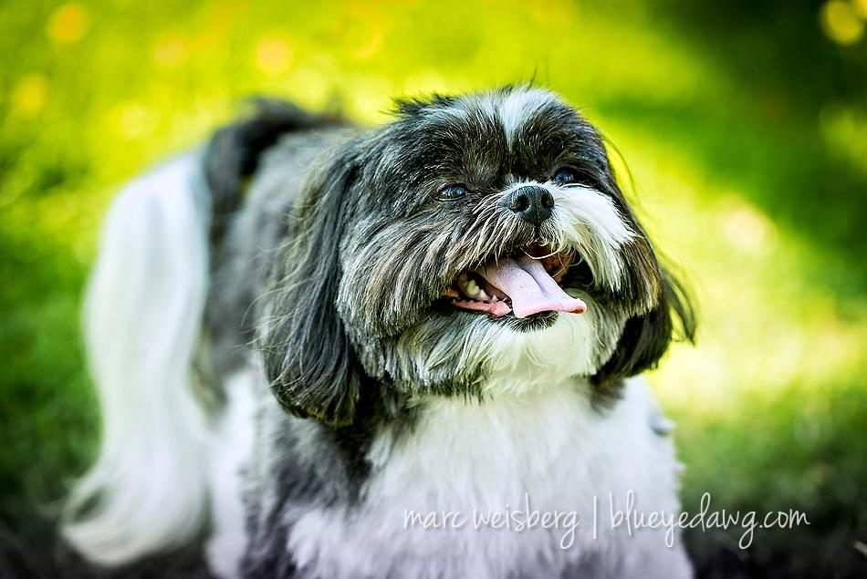 pet photographer_0069
