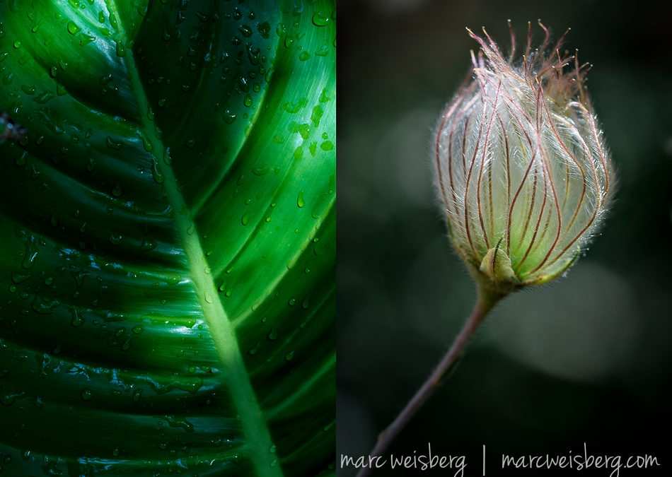 How I Fell Instantly In Love With Macro Photography